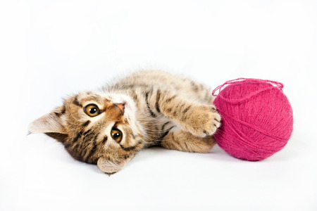 Small tabby kitten playing with a ball of yarn