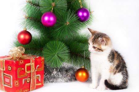 Tabby kitten sitting in Christmas decorations photo