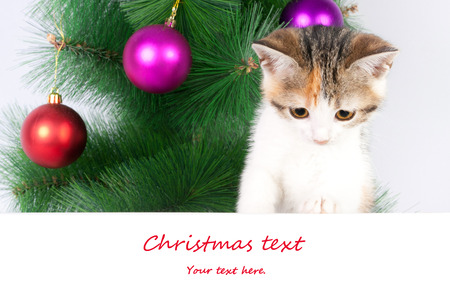 kitten with a bulletin board and Christmas text photo
