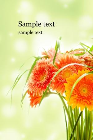 bright bouquet, chrysanthemum flowers close up