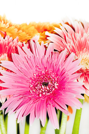 bright bouquet, chrysanthemum flowers close up photo