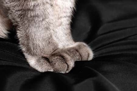 gray cat: Gray fluffy cat paws close-up