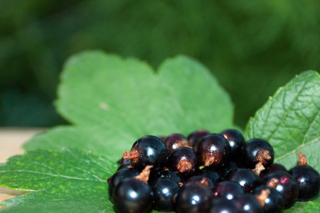 handful of black currant ( summer background ) Stock Photo