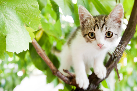little kitten on a tree with green foliage