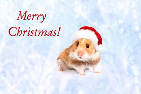 santa hamster: Hamster in a red Santa hat. Merry Christmas.  Happy New Year and Banner