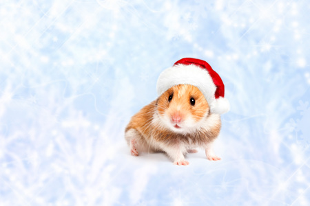 Hamster in a red Santa hat. Merry Christmas.  Happy New Year and Banner