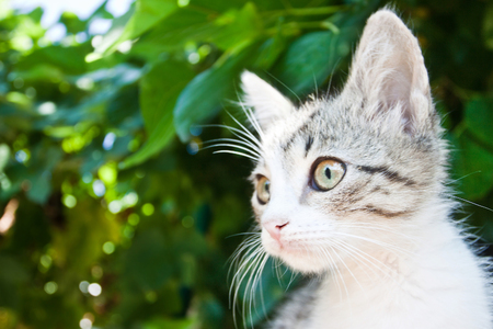 little cat on a tree with green foliage