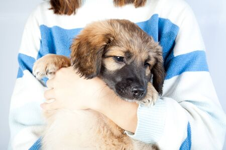 sad puppy golden retriever in the hands of the owner closeup