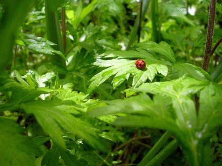 Ladybugs world!
