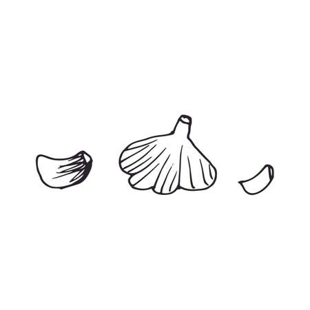 Garlic. Hand drawn vector illustration , print. Black doodle. Hand Drawn Doodle Style Realistic Illustration.Vector Illustration.