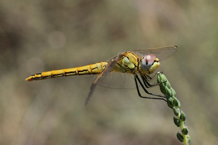 bright: Yellow dragonfly perched on a plant.