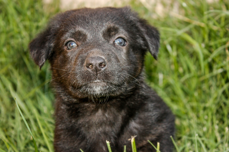 Cute black puppy looking at the camera Stock Photo