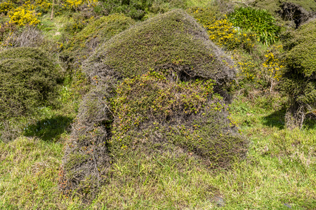 Dense coastal bush on Pencarrow Coast Wellington, New Zealand 免版税图像