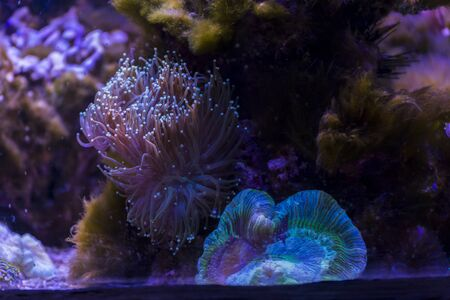 Marine ecosystem background on a coral reef Фото со стока