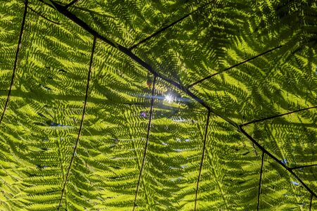 Exotic tropical fern leaf on Central Park, Wellington, New Zealand