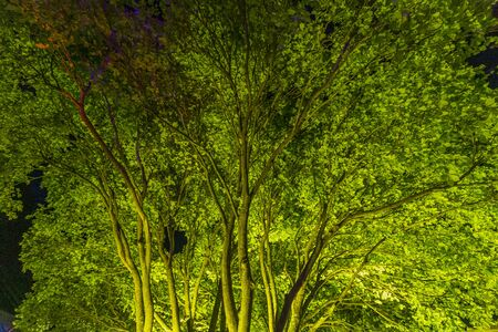 Tree illuminated by the artificial lights