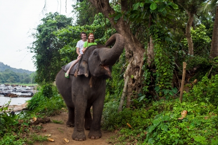 Young couple tourists to ride on an elephant in Pinnewala, Sri Lanka. Stockfoto