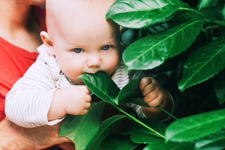 Nature discovery by baby child in green color clothes. Family walking outdoors at summer day. Stock Photo