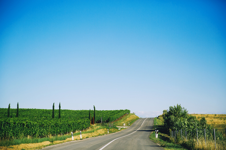 Typical landscape of nature in Croatia on the coast of Istria. Beautiful empty road with rows of young grapes in the countryside. Summer day. Nature green background.