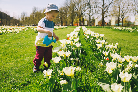 Little boy in beautiful garden with watering can among yellow tulips flowers. Child playing outdoors in spring park. Tulip field in Arboretum, Slovenia. Family on nature