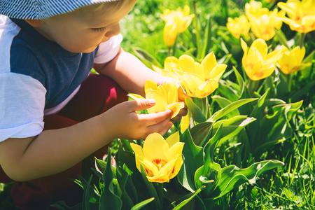 Child holding in his hands and smelling yellow tulips flowers. Little boy playing outdoors in spring park. Tulip field in Arboretum, Slovenia Banque d'images