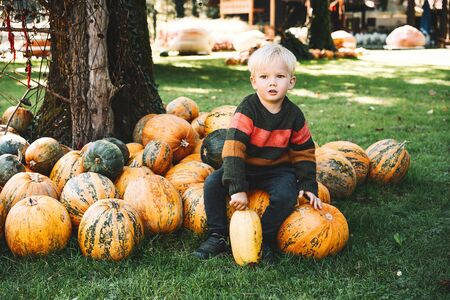 Child picking pumpkins at pumpkin patch. Little boy playing at field of squash. Thanksgiving holiday season. Family autumn background.