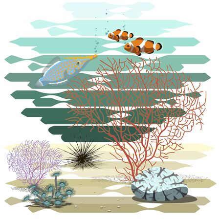 Illustration of the underwater world.Corals, three fishes and the sea urchin. Illustration