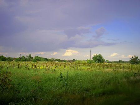 imminent: imminent rain over the field with crops all inyellow color