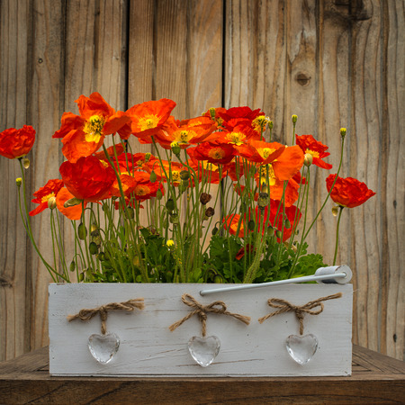 Red poppies on the wood background