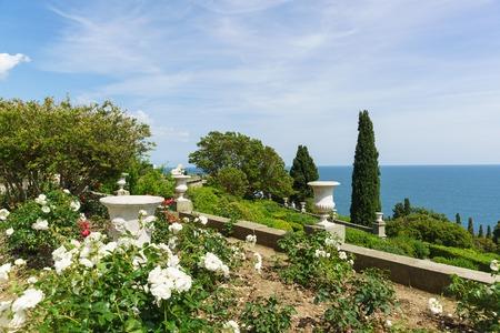 alupka: Roses on the southern terraces of the Vorontsov Palace. Yalta, Alupka, Crimea, Russia