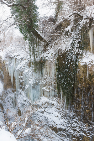 Icicles and evergreen Colchis ivy (lat. ?edera colchica K. Koch) on the steep slopes of the canyon - the gorge of the White river in the Republic of Adygea, Russia. Snow winter cold day