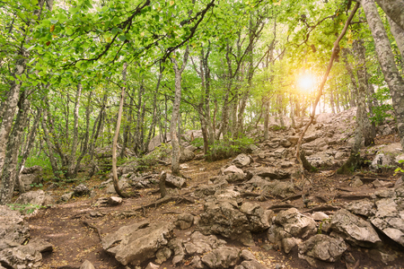 The suns rays make their way through the leaves of a beech grove on the slope of mount AI-Petri. Rocky trail to the top of the Crimean mountain 写真素材