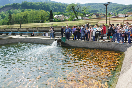 Adler, Sochi, Russia - may 04, 2019: Tour group tourists stoic around the artificial pond trout farm. Demonstration rainbow trout breed Amber Adler