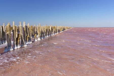 Wooden remains of the destroyed dam on the salt lake Sasyk Sivash bright pink. Western part of the Crimean Peninsula, Yevpatoria