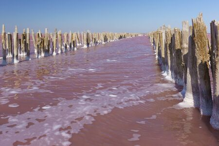 Pink lake Sasyk Sivash in the Western part of the Crimean Peninsula, Yevpatoria. The remains of a wooden dam from salt mining