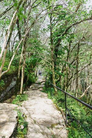 Enclosed by railings, pathway health walking route in the yew-boxwood grove of Khosta district. Sochi, Russia Stock fotó