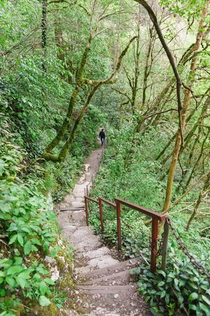 Descent on the walking route in the yew-Box grove. Hosta, Sochi, Krasnodar region