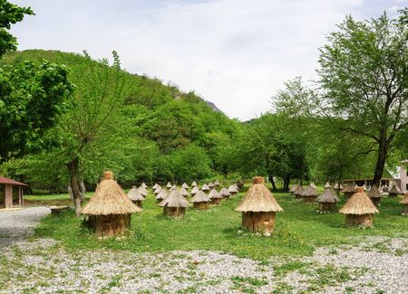 Rows of wooden beehives covered with straw stand in a green clearing. Spring Reklamní fotografie