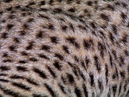 Wild cat background photo