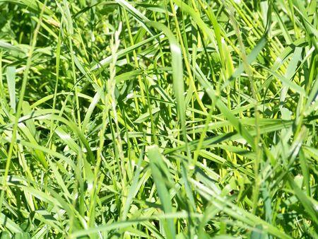 closeups: Green grass background