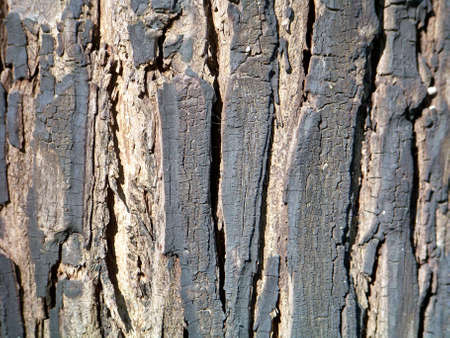 rapprochement: Burned tree barks texture  Stock Photo