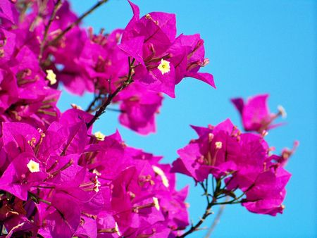 White and pink flowers under the blue sky photo