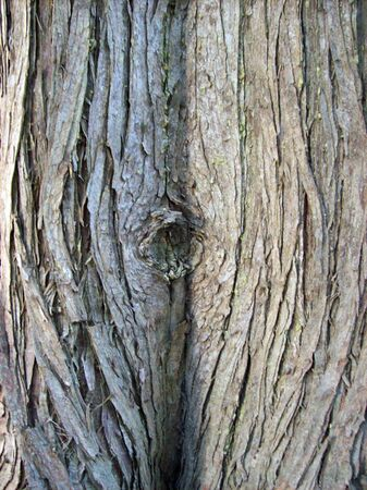 Tree trunk close up Stock Photo - 5572544
