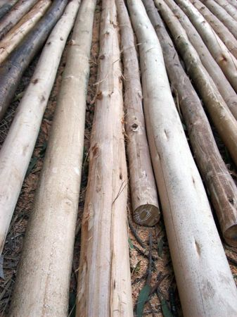 materia prima: Log, materie prime per la costruzione