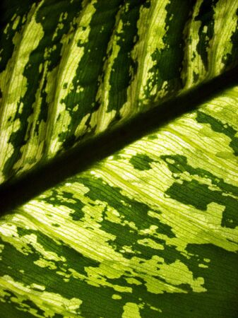 Background of a green leaf texture Stock Photo - 5760760