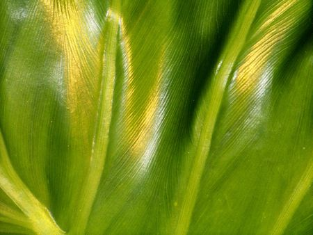 Green glossy natural background of a leaf Stock Photo - 5780216