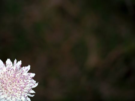 rapprochement: Delicate pink flower close up on a corner Stock Photo