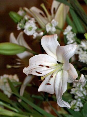 White pure flowers arrangement Stock Photo - 6095770