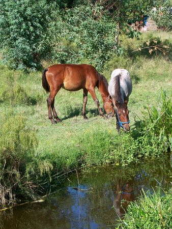 Brown and white horses besides a river Stock Photo - 6130329