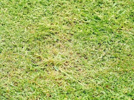 Texture of natural green grass Stock Photo - 6176322